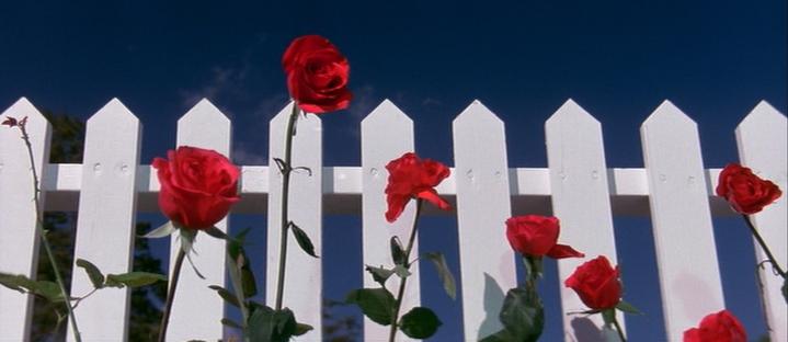 blue-velvet-roses_palissade