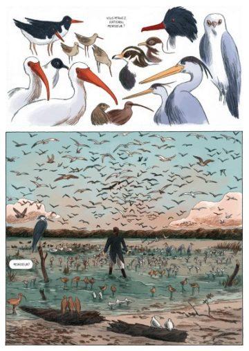 image planche oiseaux sur les ailes du monde audubon fabien grolleau jérémie royer dargaud