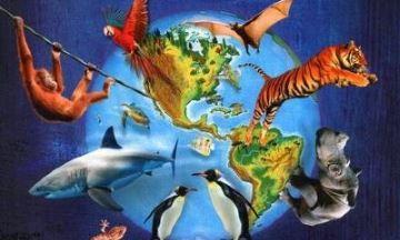 image critique l'atlas des animaux