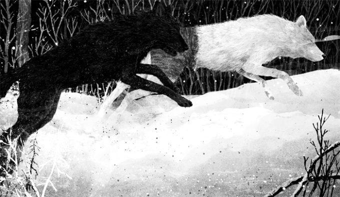 image illustration coeur de loup par gelrev ongbico loup blanc et loup gris