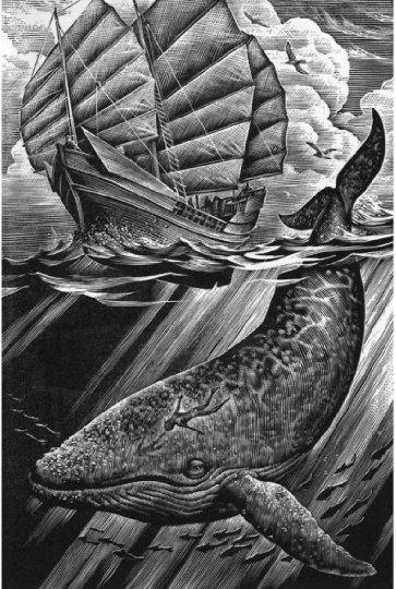 image illustration cocobolo andrew davidson contes des particuliers