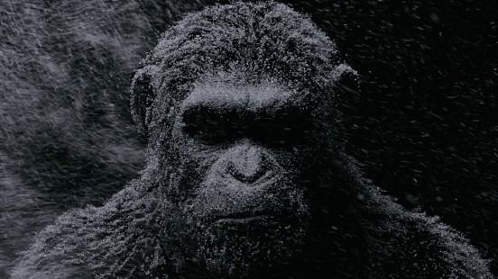 image news la planete des singes