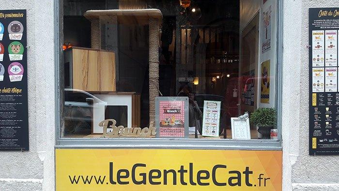 image bar à chats gentlecat lyon vitrine extérieure