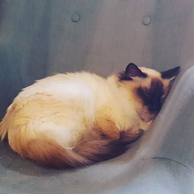 image elizabeth endormie bar à chats le comptoir du gentlecat lyon