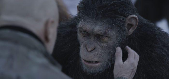 image matt reeves la planète des singes suprématie