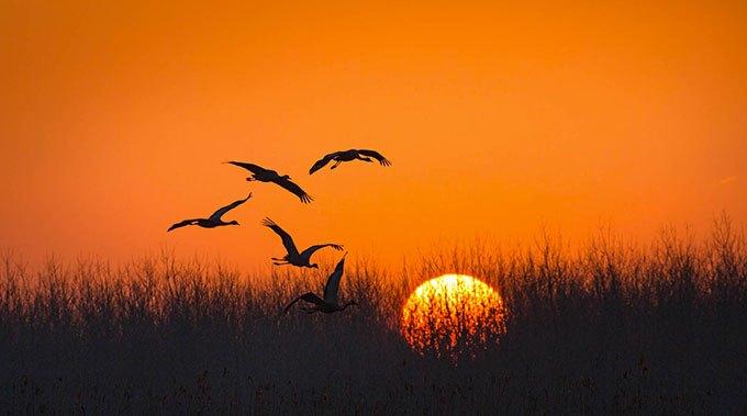 image coucher de soleil nés en chine disney nature