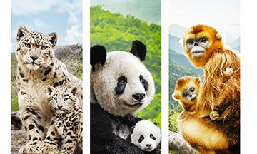 image gros plan affiche nés en chine documentaire disney nature