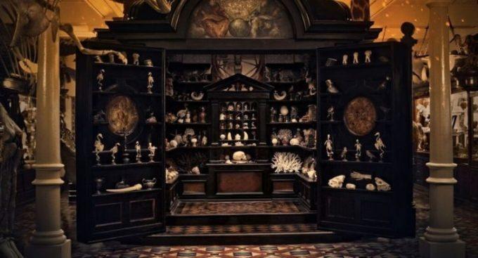 image cabinet de curiosité le musée des merveilles todd haynes