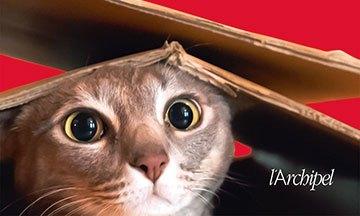 image gros plan couverture le chat qui a tout vu sam gasson éditions l'archipel