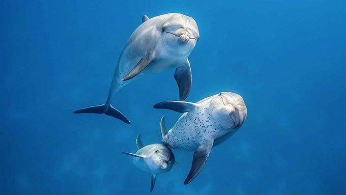 image dauphins film blue disney nature