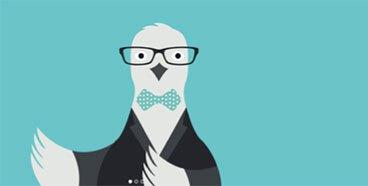 image gros plan pigeon hostmaker