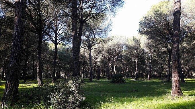 image parc naturel donana almonte andalousie espagne