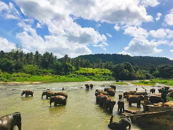 image éléphants sri lanka