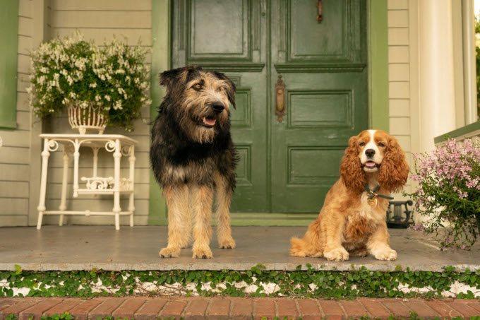 la belle et le clochard 2019 chiens sur le perron disney plus