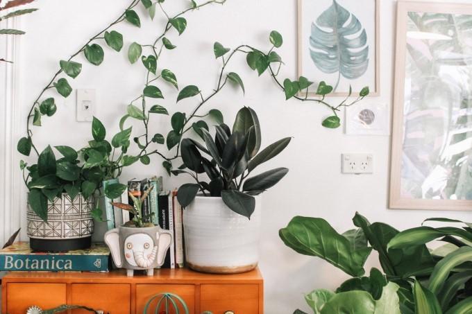 décoration d'intérieur plantes vertes salon