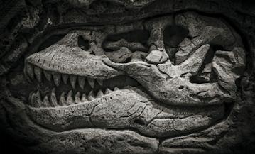 Couverture de l'Encyclopédie visuelle de la vie préhistorique