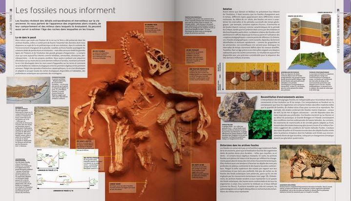 """""""Les fossiles nous informent"""", pages extraites de """"L'Encyclopédie visuelle de la vie préhistorique"""""""